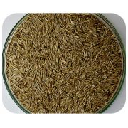 Sementes Azev�m Anual - Caixa com 1,0 kg - (72%VC)