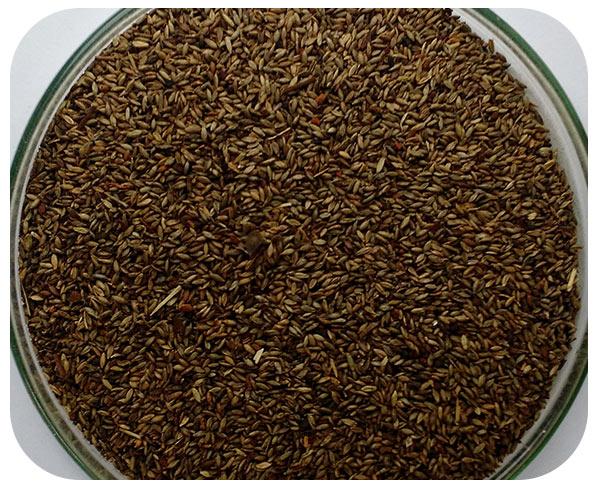 Sementes Massai - Caixa com 2,0 kgs - ( 72%VC )